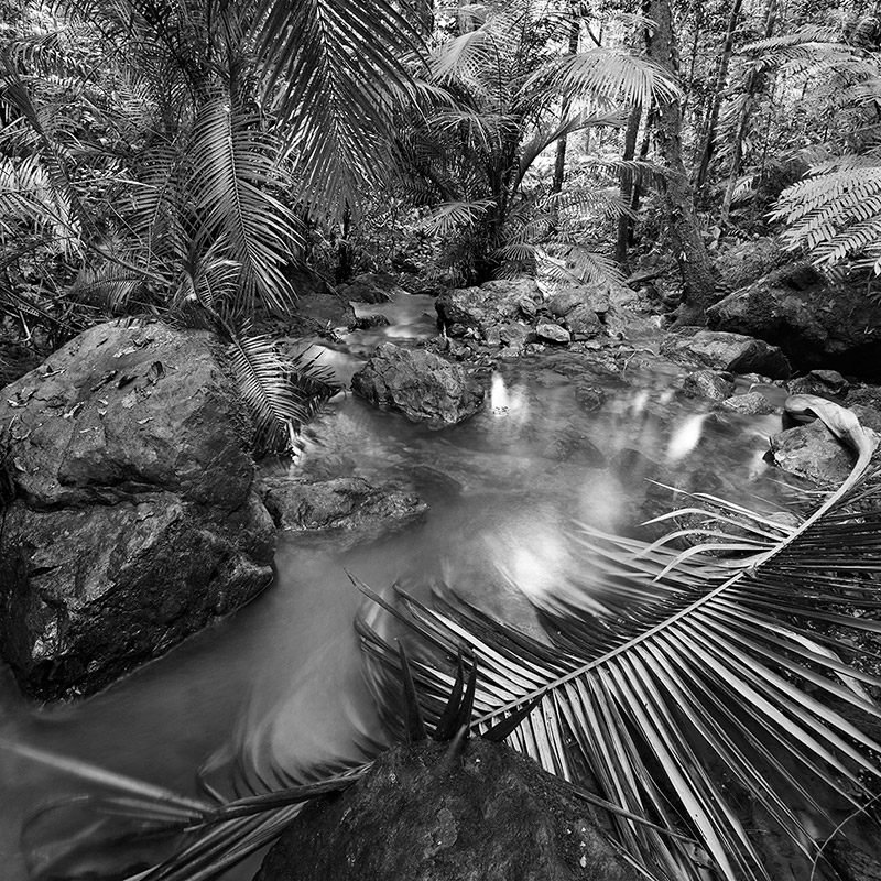 Daintree forest3, Queensland, Australie. 2014
